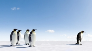 Leading Penguins Following